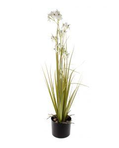 Laukka valkoinen 87cm GRASS